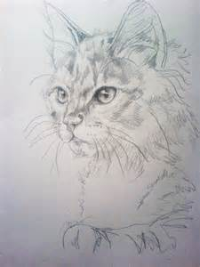 cat drawings cat sketch 1 by nimroderriver on deviantart