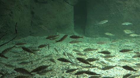 lausanne aquatis le plus grand aquarium vivarium d eau