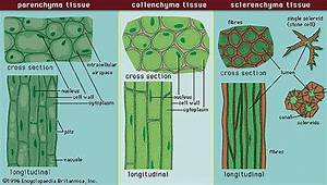 I Study  Cell Structure And Cell Organisation