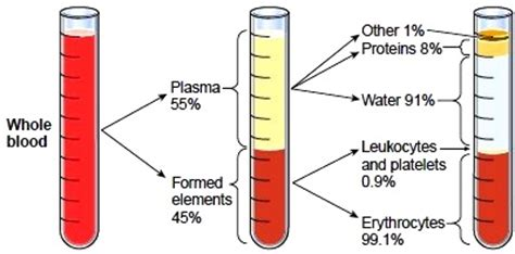 which blood component gives blood its color topic 2 exercise physiology ib