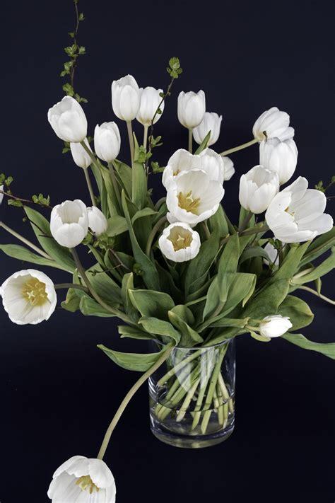 gambar alam menanam daun bunga bunga tulp musim semi