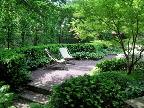 glamorous european hornbeam method st louis modern landscape decoration ideas with bushes