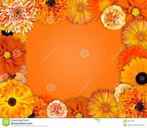 Flower Frame With Orange Flowers Stock Photo - Image: 29677230