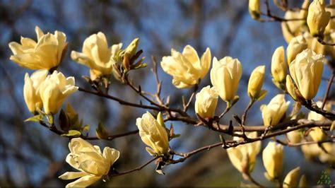 Pavasara prelūdija! - YouTube