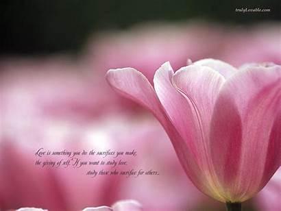 Sacrifice Quotes Romantic Someone Flowers Hazrat Khan