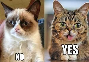 Grumpy Cat vs Lil Bub | Grumpy cat, Bub the cat, Cats