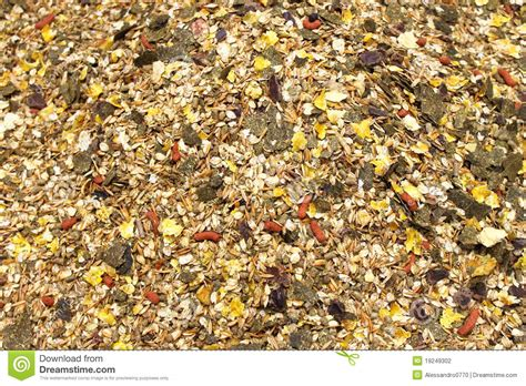 Horse Feed Mix Stock Photo. Image Of Closeup, Nutrition