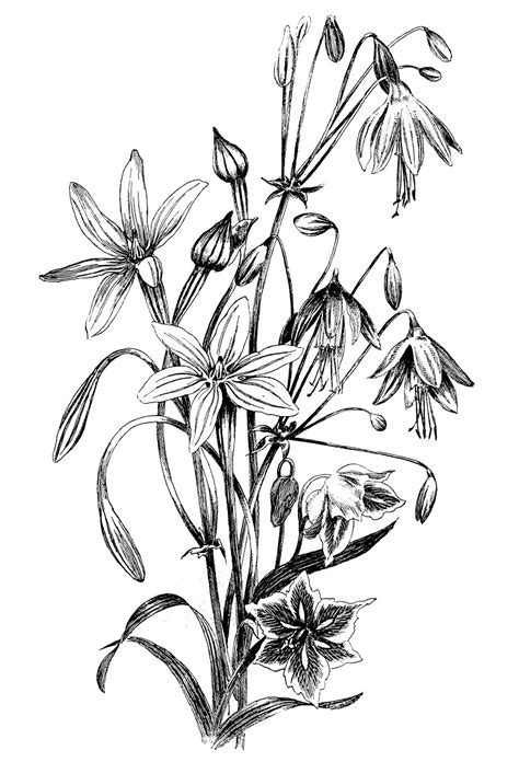 Black and White Floral Drawing - The Graphics Fairy