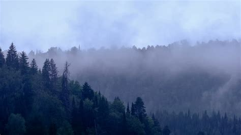 Time Lapse Of Fog Rolling In Over The Hills With Pine Tree