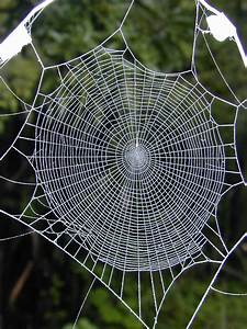 spider webs | Drugged spiders' web spinning may hold keys ...