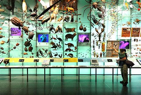 The Massive Fossil Collection At The American Museum Of