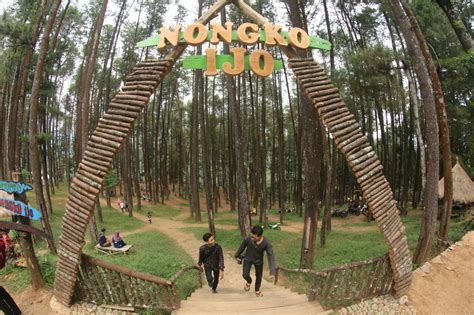 wisata hutan pinus  jawa timur  keren abis buat