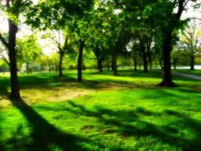 file jackson park trees milwaukee jpg wikimedia commons