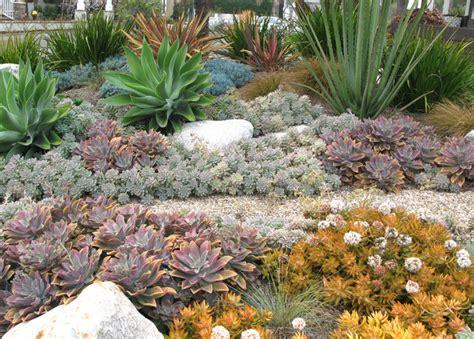 seaside colorful succulent garden