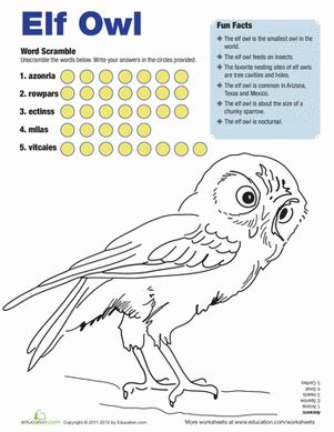 elf owl facts worksheet educationcom