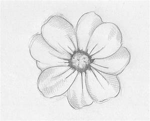 Beautiful Flowers Pencil Drawing Pencil Colors For Kids ...