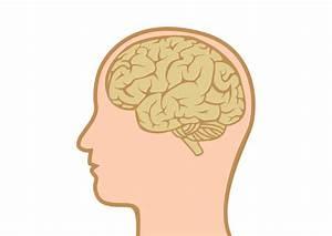 Human Head With Brain Flat Vector
