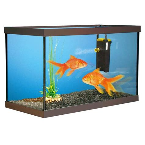 achat aquarium pas cher acheter un aquarium pour poisson