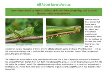 Animal Classification: Rainforest Invertebrates Distance