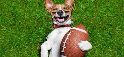 17 Underdog Quotes For The Super Bowl That Might Help The