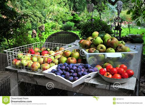 home gardening harvest stock photography image 33743112