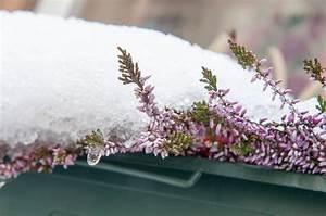 Balkonpflanzen Winterfest Machen : blumenkasten winterfest machen so wird 39 s gemacht ~ Watch28wear.com Haus und Dekorationen