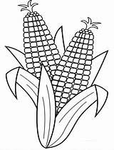 Corn Coloring Pages Cob Stalk Fall Drawing Harvest Line Indian Stalks Harvesting Easy Ear Preschool Colouring Outline Ears Clip Coloringsun sketch template