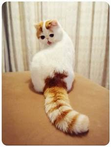 Snoopy cat The most Cutest Cat Breed in World - Cutest Cats