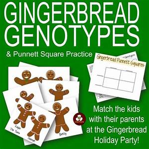 Gingerbread Genotypes and Punnett Square Practice: A ...