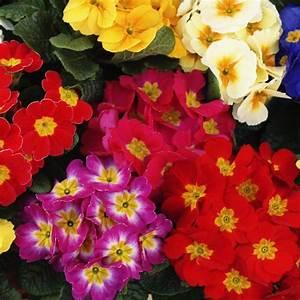 Fleur D Hiver Pour Jardinière : plantes d 39 hiver pour balcon liste ooreka ~ Dailycaller-alerts.com Idées de Décoration
