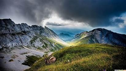 Wildlife Desktop Mountain Landscape Forest Wallpapers Switzerland