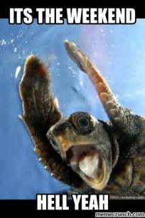 Turtle Meme - weekend turtle