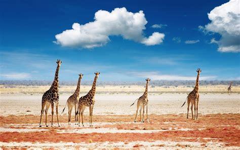 African Scenery Desktop Wallpaper