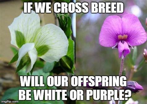 Purple Wedding Meme - purple wedding meme 28 images gameofthrones get married and die purple wedding meme purple