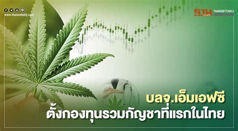 บลจ.เอ็มเอฟซี ตั้งกองทุนรวมกัญชาที่แรกในไทย