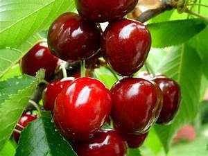 Fruit Warehouse  Cherry   Prunus Avium
