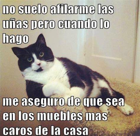 Memes De Gatos - sue 241 os de amor y magia imagenes para compartir en el muro buscar con google fotos de gatos