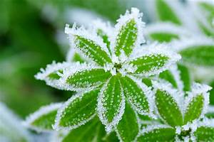 Winterharte Pflanzen Liste : winterharte pflanzen diese pflanzen berleben die kalte ~ Michelbontemps.com Haus und Dekorationen