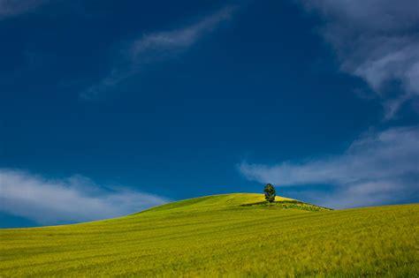 green tree  grass field  daytime  stock photo