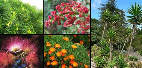 mediterranean plants and trees 10 mediterranean plants you should never use in your design