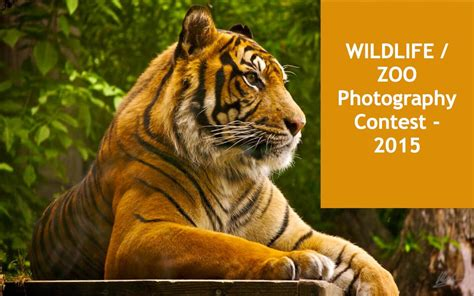 wildlife photography contests  children adults