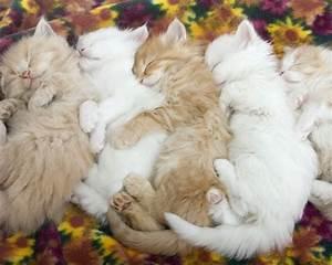 Cute Kittens Pics | Wallpaper Zoom