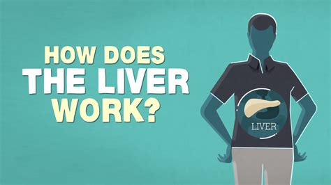 What Does The Liver Do?  Emma Bryce Youtube