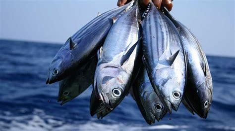 special report  fisheries  aquaculture  nigeria
