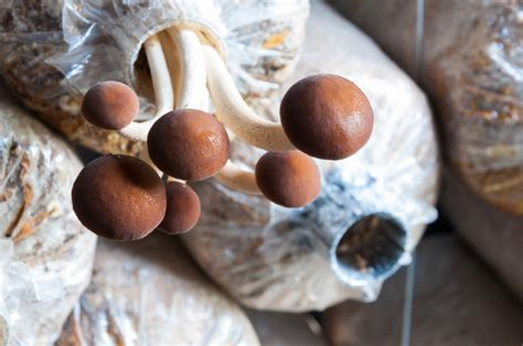 Pilze Im Garten Vermehren by Pilzen Pflanzen 187 Diese Pilze K 246 Nnen Sie Anbauen