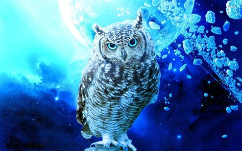Background Digital Owl Wallpaper by Cool Owl Wallpapers Wallpapersafari