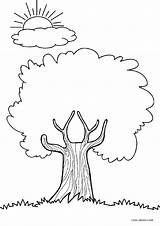 Coloring Pages Tree Trees Printable Cool2bkids Printables Sheets Worksheets Drawing Apple Pic Simple Adult Shades Different Kindergarten Index Whitesbelfast Enregistree sketch template