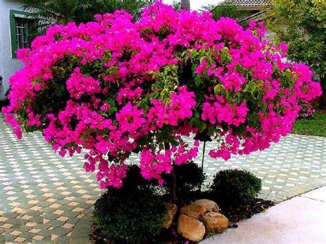 tanaman  biasa   taman  fungsinya
