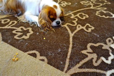 revue brosse d 233 m 234 lante de dyson anti poil de chien