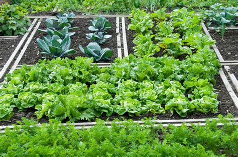 garden vegetables shade tolerant vegetables growing vegetables in a shady garden